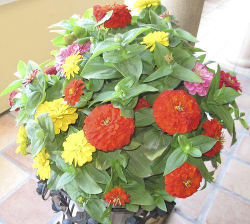 Aa flowers