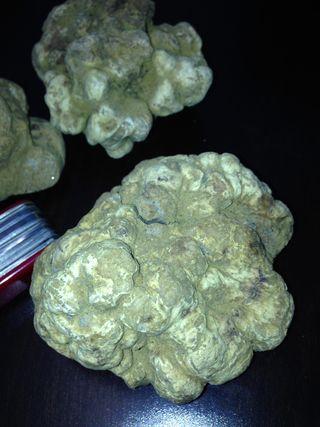 Truffle 2