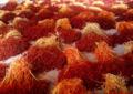 Saffron_Crop