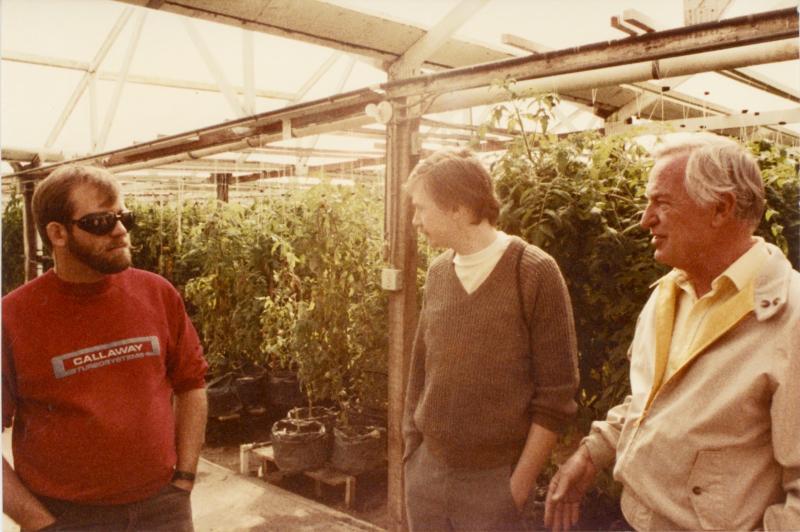 Tomato Farm (1)